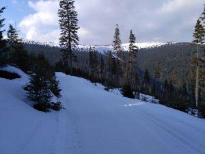 Kolečkové lyže TOMSKI